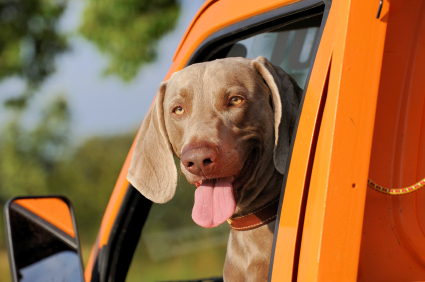 Things to Look For in a Dog Friendly Vehicle