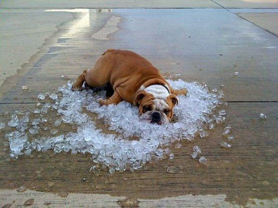 Dogs Who Can't Handle the Hot Summer Sun