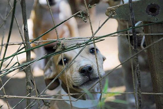 You'll Never Believe How Many Dogs Were Rescued From This Dog Fighting Ring