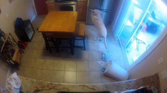 Fridge Raiding Dog Busted By Owner Using Mini Cam
