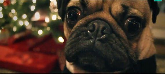 Doug the Pug – All I Want For Christmas Is Food