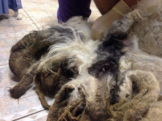 You Won't Believe There's A Dog Under All That Fur