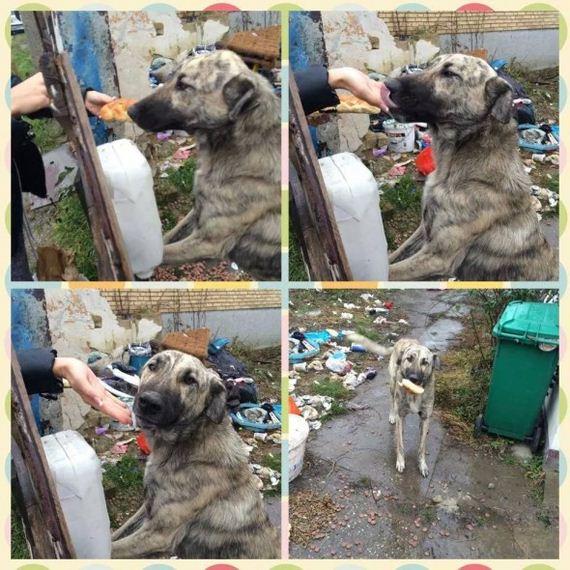 02-Abandoned-Dog-Waiting-Owners