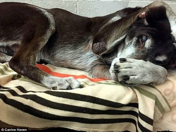 Senior Dog Who Saved Family from Fire Gets Dumped at Kennel