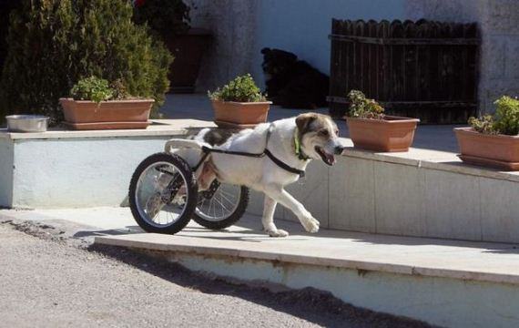 02-cool_dog_gets