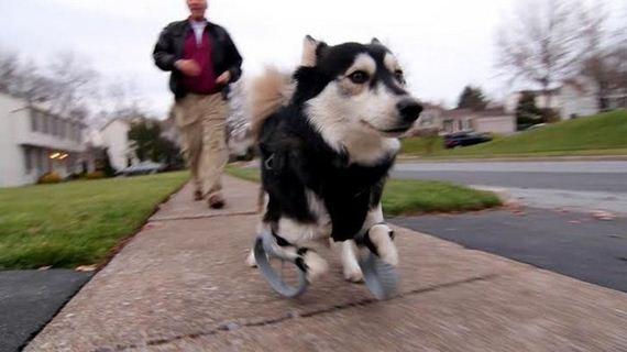 02-dog_can_walk