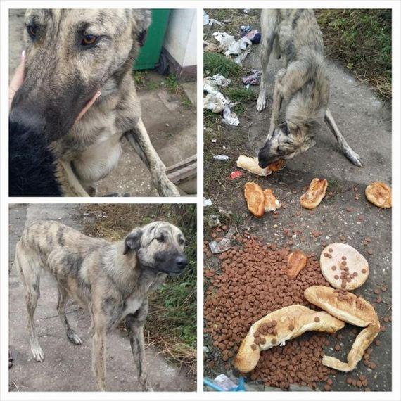 03-Abandoned-Dog-Waiting-Owners