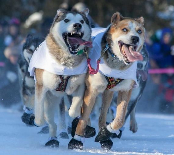 03-Dogs-Happy-About-Winter
