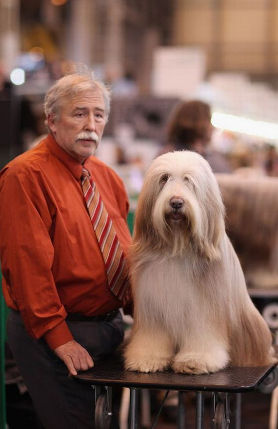 03-Owners-Who-Look-Dogs
