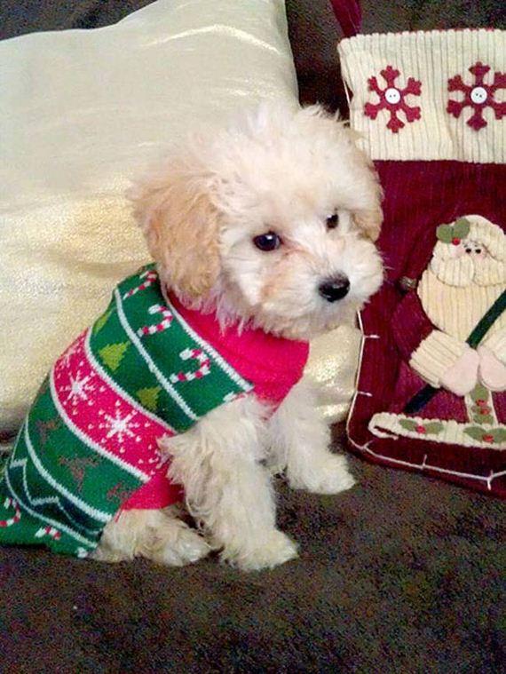 03-Ugly-Christmas-Sweaters