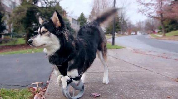 03-dog_can_walk