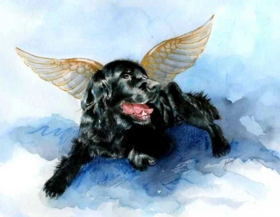 03-ope-Francis-Says-All-Dogs-Go-to-Heaven
