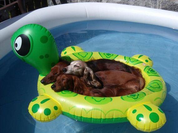 04-Dogs-Hot-Summer-Sun