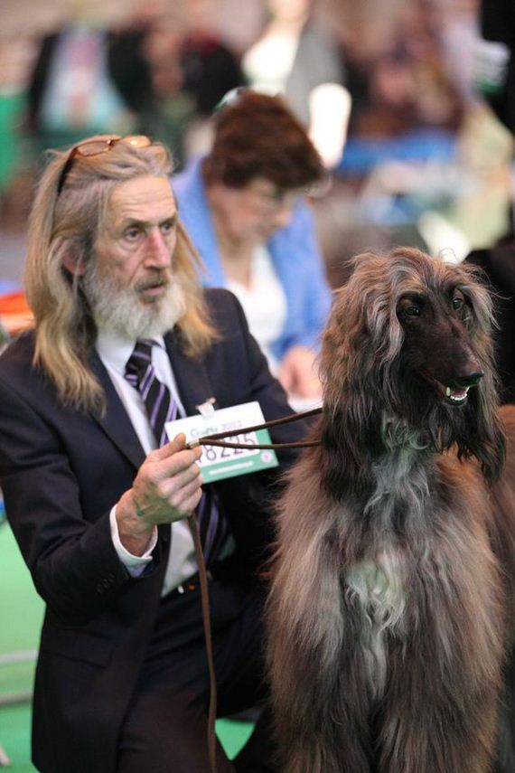 Owners Who Look Like Their Dogs