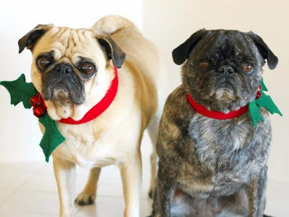 Cheerfully Chubby Christmas Ready Pugs