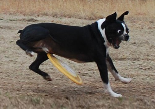 05-Dogs-Getting-Completely
