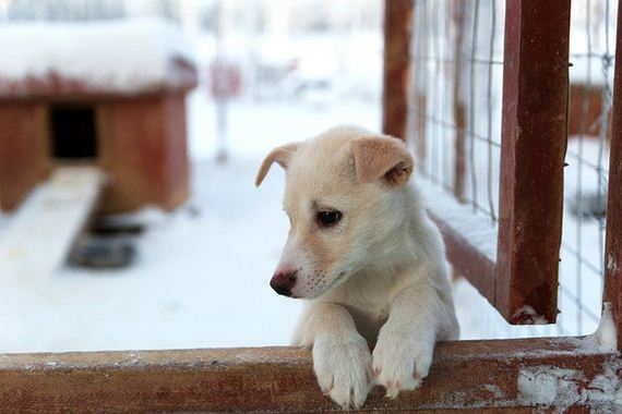 05-Dogs-Happy-About-Winter