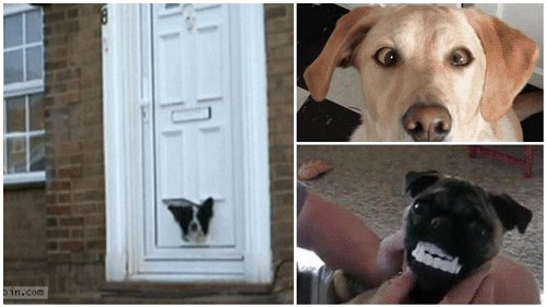 Hilarious Pranks That Owners Pulled on Their Dogs
