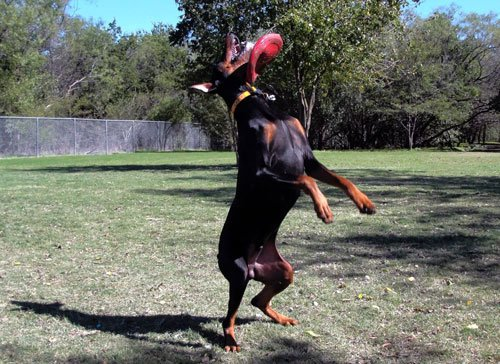 06-Dogs-Getting-Completely