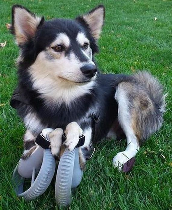 06-dog_can_walk