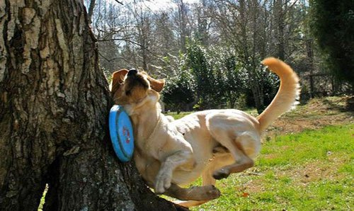 Dogs Getting Completely Owned By Frisbees
