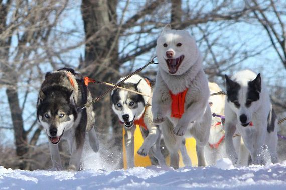 07-Dogs-Happy-About-Winter