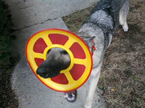 08-Dogs-Getting-Completely