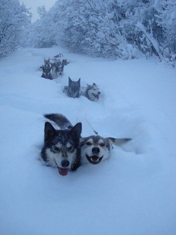 08-Dogs-Happy-About-Winter