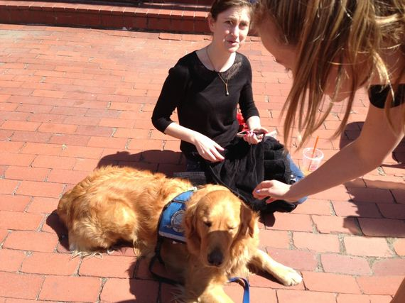 09-Therapy-Dogs