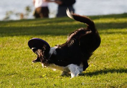 10-Dogs-Getting-Completely