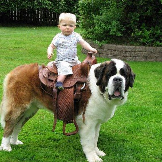 10-Gentle-Giant-Dogs