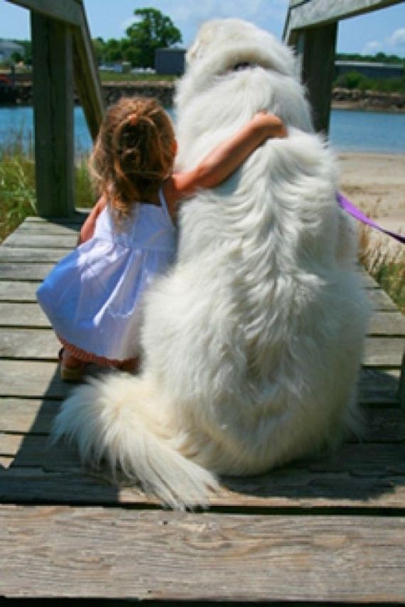 11-Gentle-Giant-Dogs