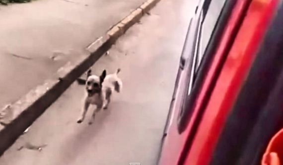 Loyal Dog Runs After Ambulance Transporting His Owner