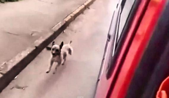 Loyal Dog Runs After Ambulance Transporting His Owner