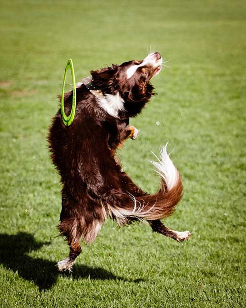 12-Dogs-Getting-Completely
