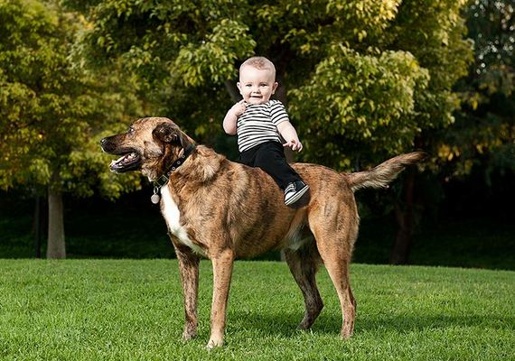 12-Gentle-Giant-Dogs