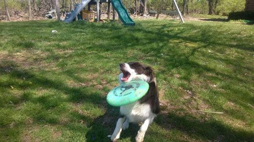 13-Dogs-Getting-Completely
