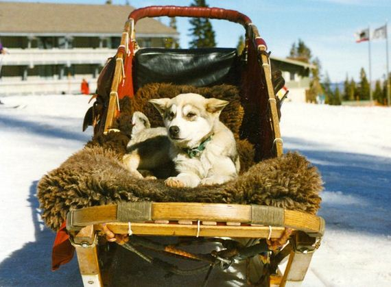 13-Dogs-Happy-About-Winter