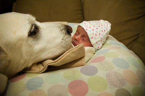 13-Gentle-Giant-Dogs