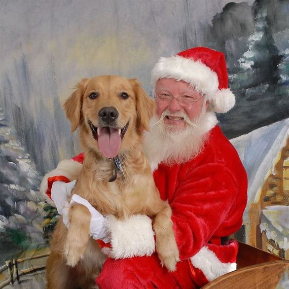Pets Perfectly Posed With Santa Claus