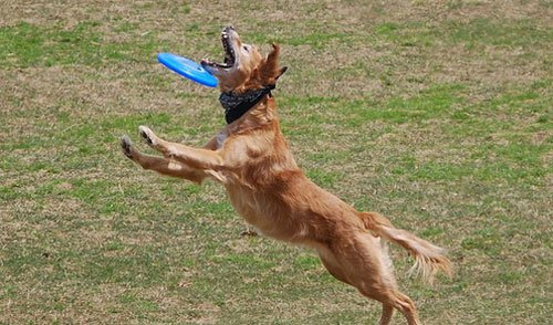 14-Dogs-Getting-Completely