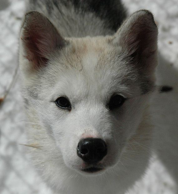 14-Dogs-Happy-About-Winter