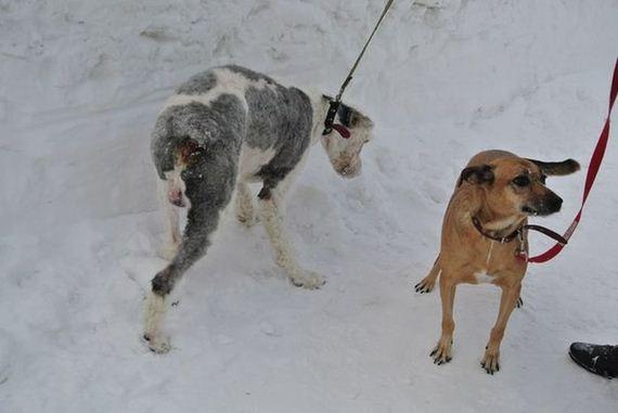 14-rescue_dog