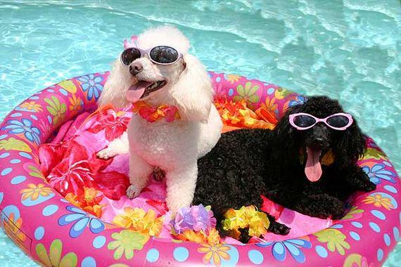 15-Dogs-Hot-Summer-Sun