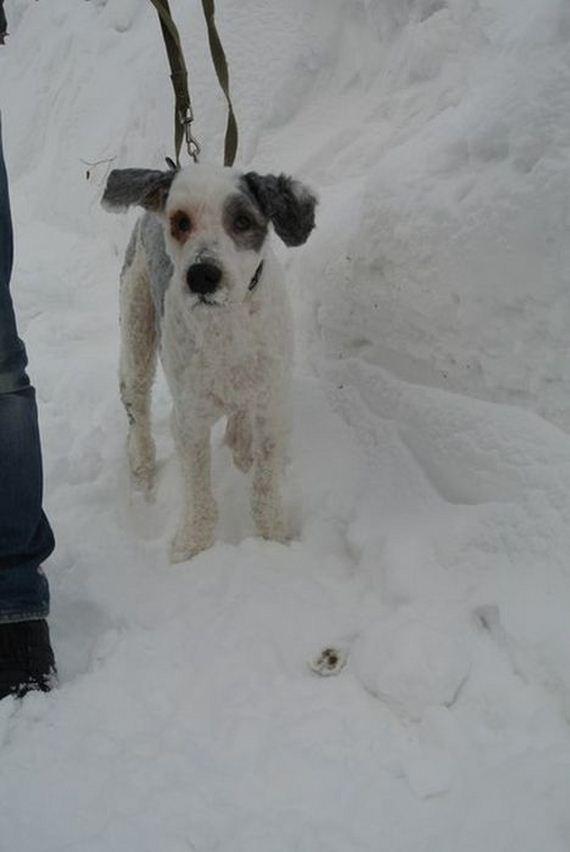 15-rescue_dog