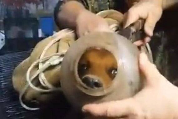 A Puppy Had A Hard, Plastic Container Stuck On His Head For Two Months