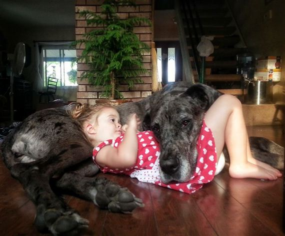 16-Gentle-Giant-Dogs