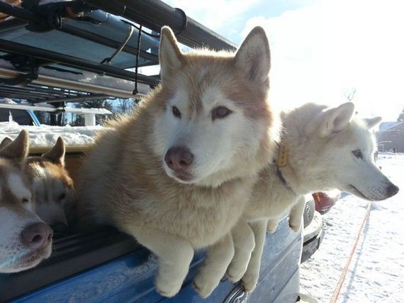 17-Dogs-Happy-About-Winter