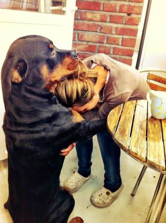 17-Thankful-Your-Dog