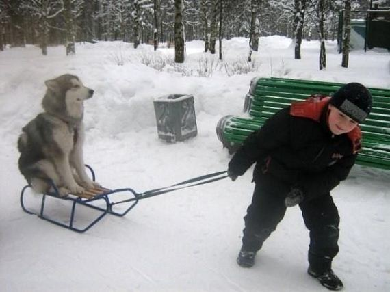 18-Dogs-Happy-About-Winter